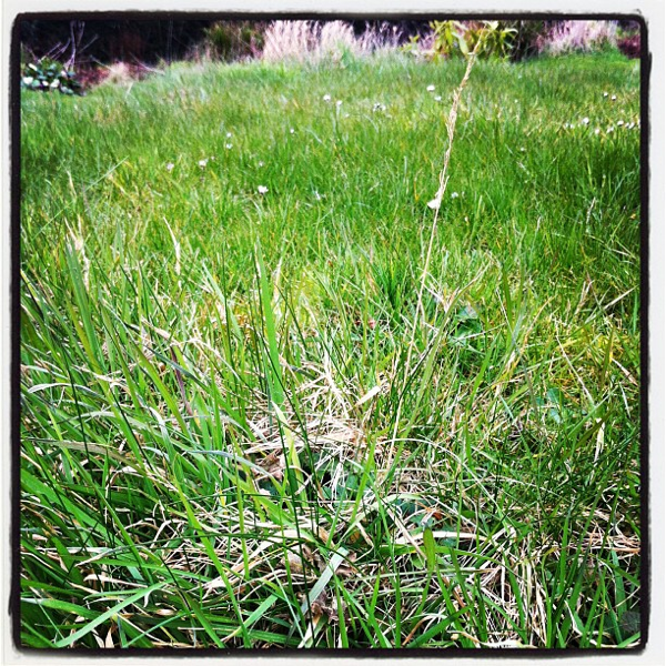 600 shaggy grass midsummercottage.co.uk
